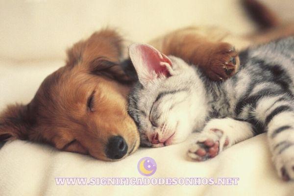 Os animais sonham?