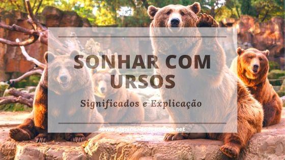 Veja agora o simbolismo dos sonhos com ursos