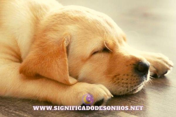 Os cachorros sonham? Descubra!