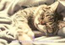 Os gatos sonham? Descubra!