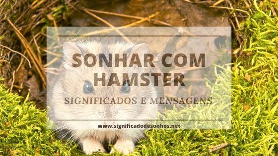 Descubra todos os significados de sonhar com hamster