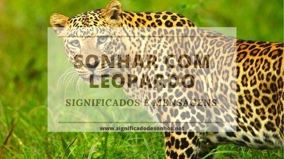 Saiba quais os significados de sonhar com leopardo