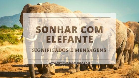 Quais os significados de sonhar com elefante?