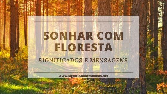 Entenda os significados de sonhar com floresta