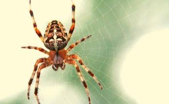 Significados de Sonhar com Aranhas