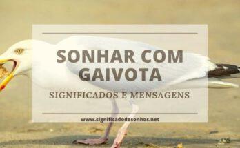 Desvende os Significados de Sonhar com gaivota